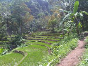Jalan menuju Curug Baligo dan pemandangannya.