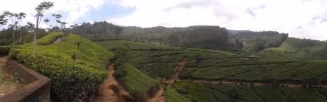 Panorama Perkebunan Teh Cipasung