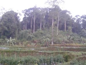 Hutan Lindung Gunung Ageung