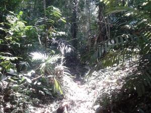 Jalan setapak penghubung antar lokasi situs di Hutang Lindung Gunung Ageung
