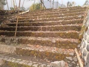 Bekas tangga menuju Pabrik Teh Argalingga (Dokumentasi Penulis)