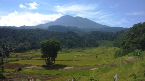 Panorama Sawah Tarikolot Bantaragung. (sumber foto: @infomjlk)