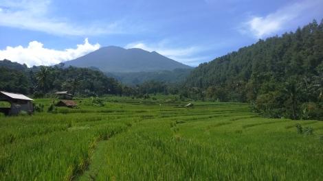 Panorama Sawah Bantaragung. (sumber foto: @infomjlk)